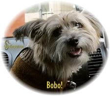Bobo!